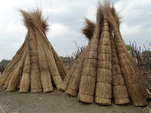 Dried grass used for thatching
